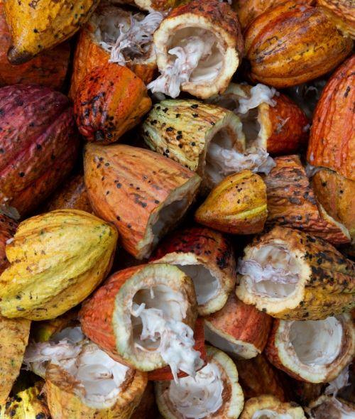 Les bienfaits du beurre de cacao pour les lèvres