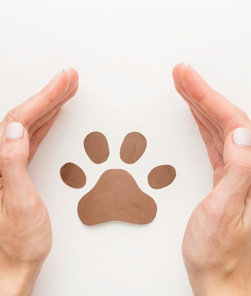 Pourquoi les baumes Carmex n'ont jamais été testés sur les animaux ?